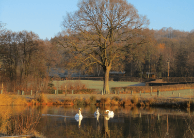 Woodside Country Park in the Autumn
