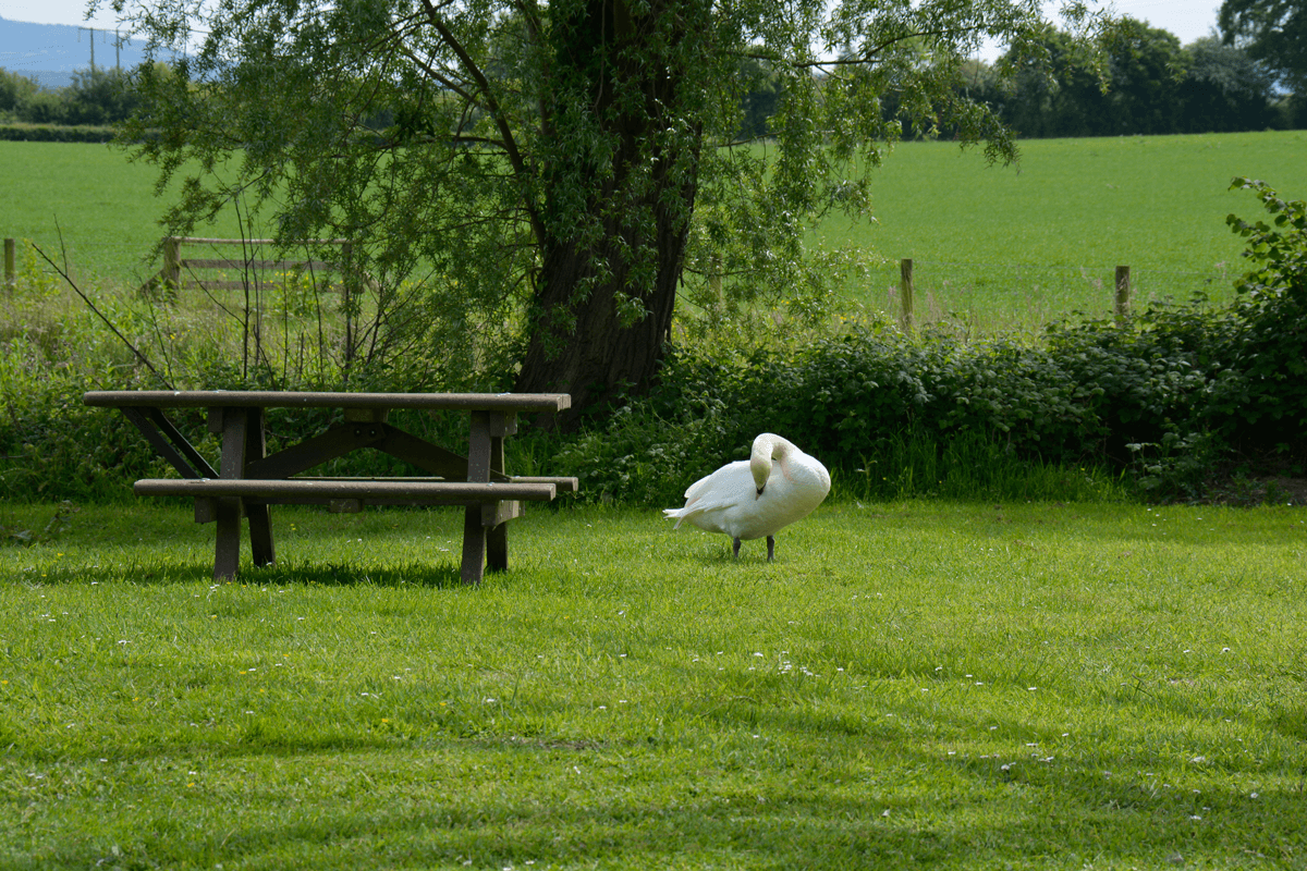 A local visitor to Woodside Country Park